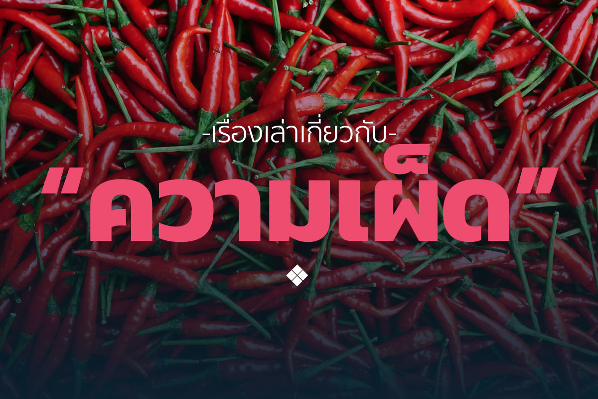 Phed Phed web2